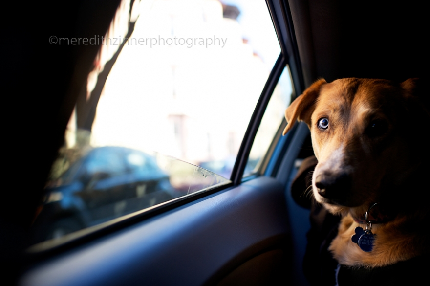 nyc_dog_pet_photographers_photography_brooklyn_park_slope_